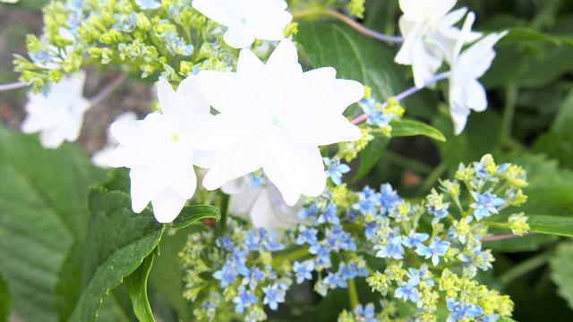 お庭にはきれいなお花も♪